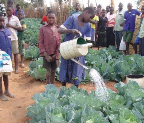 Malawi vegetable–garden_3